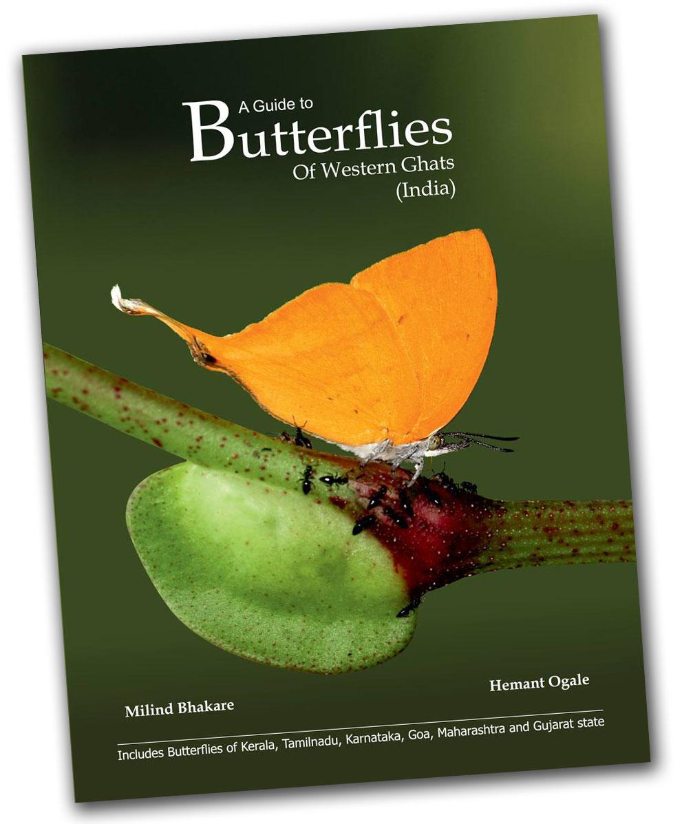 Butterflies Of Western Ghat